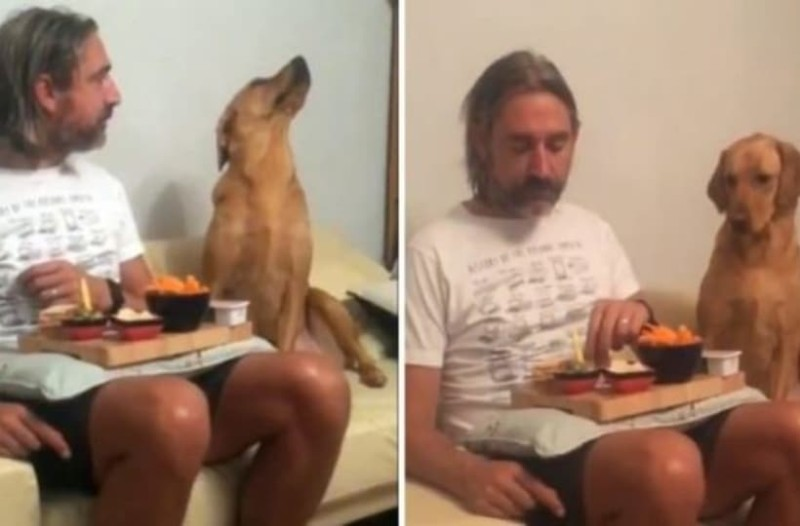 Αυτός είναι ο ζήτουλας σκύλος. Κοιτάει το αφεντικό του και στη συνέχεια... (Video)