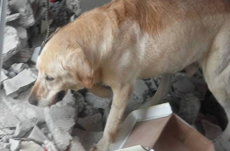 Το γνώριζες; Αυτός είναι ο λόγος που τα σκυλιά διαισθάνονται τους σεισμούς πριν γίνουν!