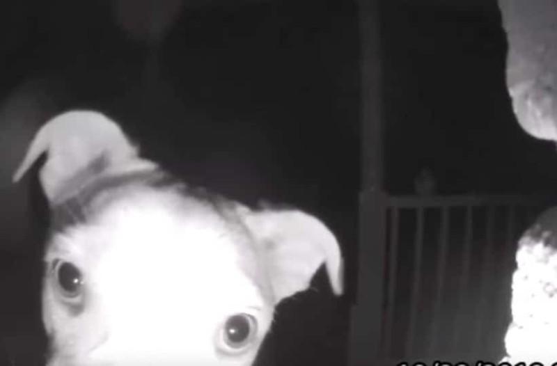 Δείτε έναν σκύλο να χτυπάει το κουδούνι του σπιτιού των αφεντικών του! (Video)
