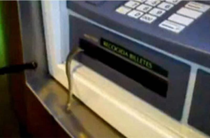Αντί να του βγάλει λεφτά το ATM, έβγαλε φίδι!