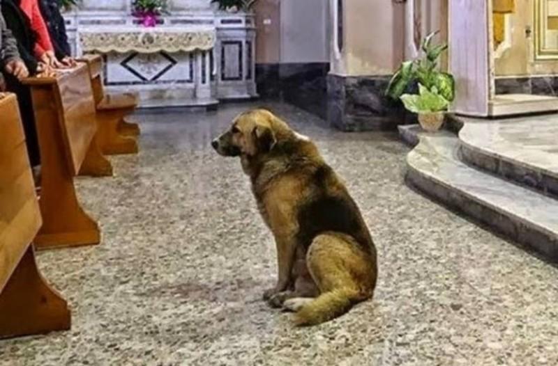 Αυτός ο σκύλος πηγαίνει κάθε μέρα στην εκκλησία – Ο λόγος θα ραγίσει και την πιο σκληρή καρδιά!