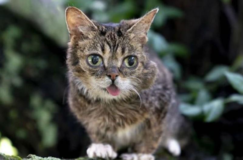 Πέθανε η γάτα - σούπερ σταρ των social media!