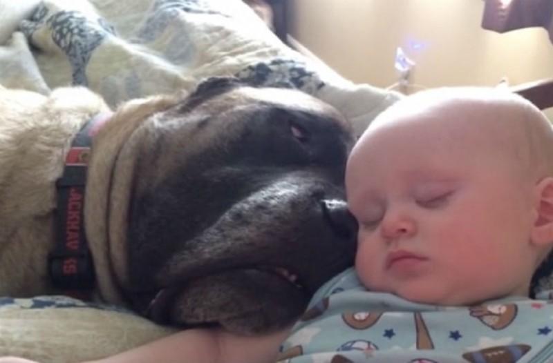 Μωρό και σκύλος ξάπλωσαν. Τότε η μάνα πήρε την κάμερα και ανακάλυψε κάτι τρομερό...