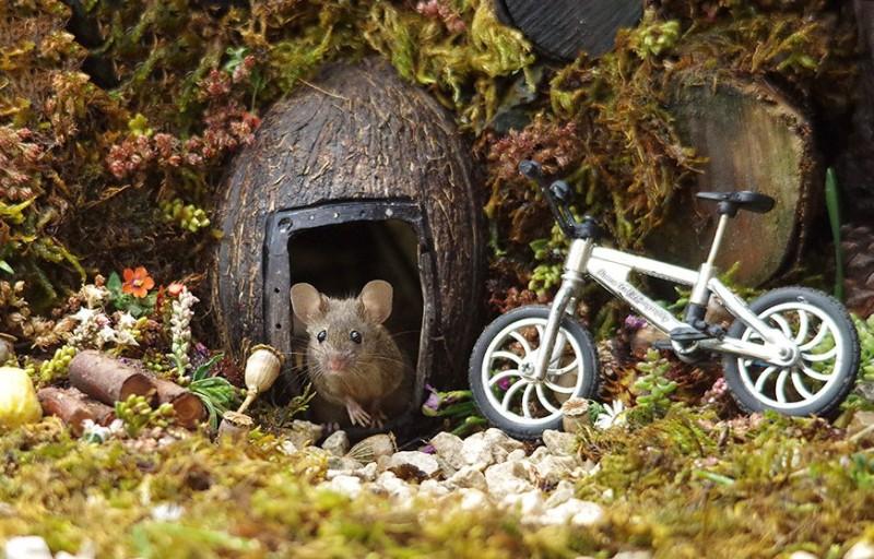 ποντίκι ποδήλατο