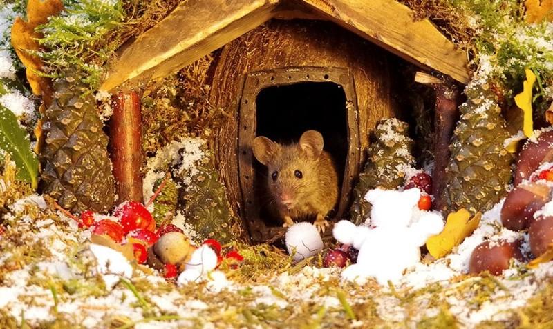 ποντίκι χριστούγεννα