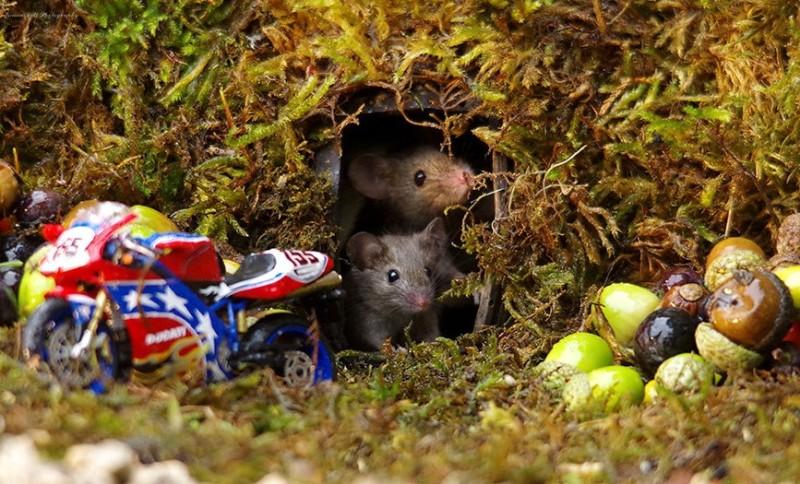ποντίκι μηχανή