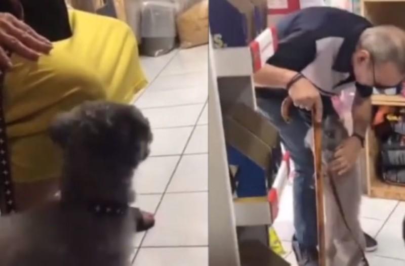 Θα λιώσετε: Αυτός ο σκύλος βρίσκει τον ιδιοκτήτη του μετά από καιρό και...η επανένωση καθηλώνει! (Video)