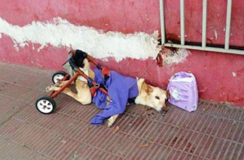 Παράτησαν ανάπηρο σκυλάκι στο δρόμο! Μαζί του άφησαν ένα χαλασμένο καροτσάκι και δίπλα του πάνες!