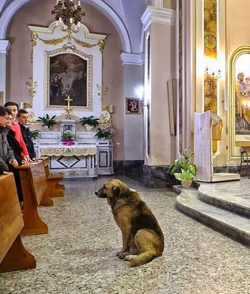 σκύλος πηγαίνει κάθε μέρα στην εκκλησία