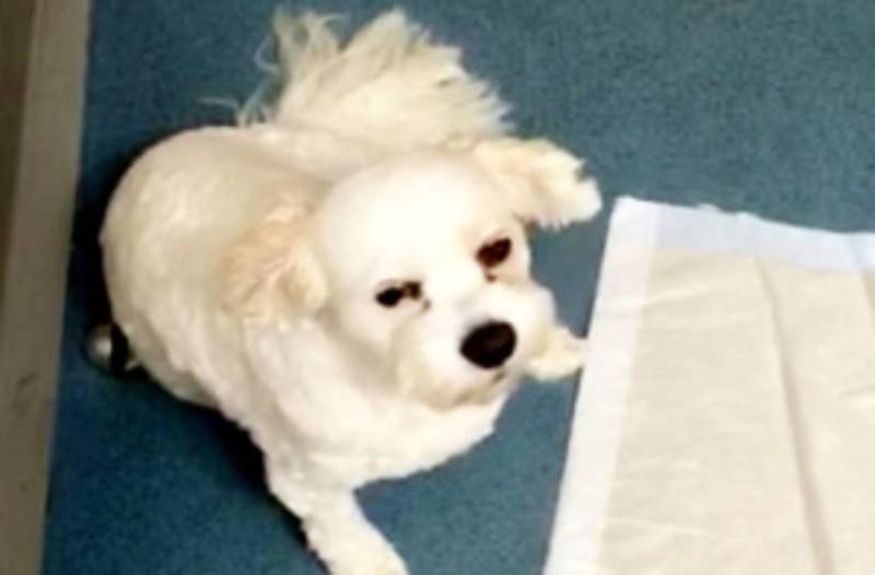 Αυτός ο σκύλος έφαγε κατά λάθος μπισκότα κάνναβης  - Αν δείτε τι του συνέβη δεν θα το πιστεύετε!
