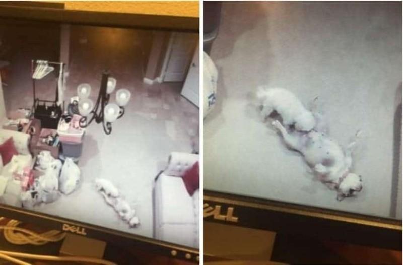 Τοποθέτησε κρυφή κάμερα στον γιο της για να τον παρακολουθήσει - Τελικά είδε τα σκυλιά της να κάνουν ό,τι πιο ντροπιαστικό!
