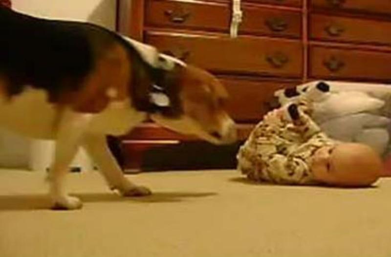 Μια μάνα έβαλε κρυφή κάμερα στο δωμάτιο του μωρού της. Αυτό που έκανε ο σκύλος θα σας αφήσει άφωνους!