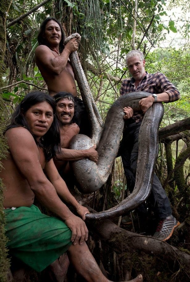 Ανακόντα Αμαζόνιος