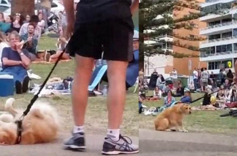 Υποκριτής σκύλος κάνει τον ψόφιο. Όταν μάθετε τον λόγο θα δακρύσετε από τα γέλια!