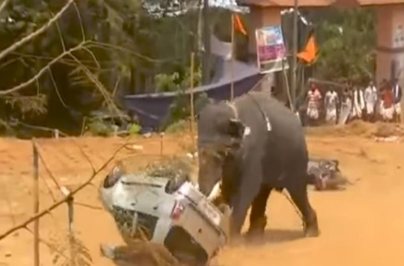 Αυτός ο ελέφαντας έχασε τα λογικά του και άρχισε να τρέχει ανεξέλεγκτα προς το αυτοκίνητο...Θα σας κοπεί η ανάσα!