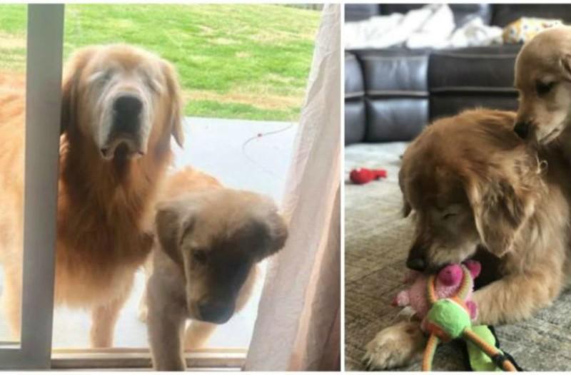 Τυφλό σκυλάκι αποκτά έναν φίλο. Μόλις μάθετε τον λόγο θα δακρύσετε!