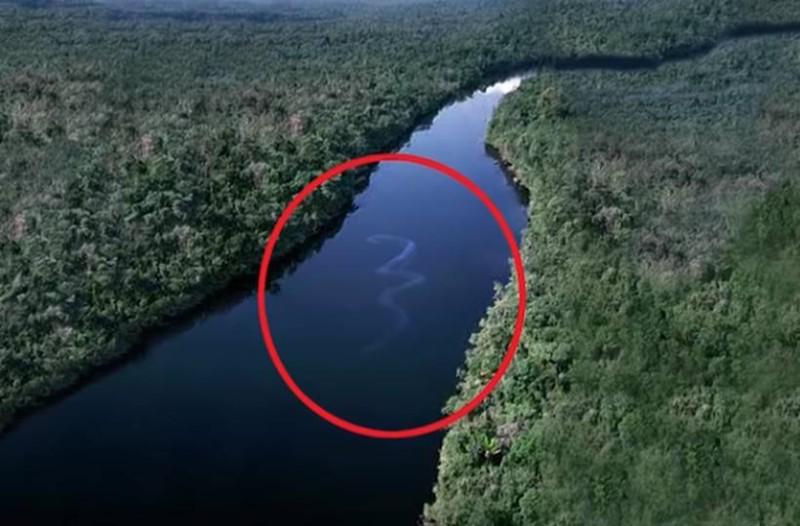 Κάμερα κατέγραψε το μεγαλύτερο φίδι του κόσμου. Είναι περίπου 180 μέτρα!
