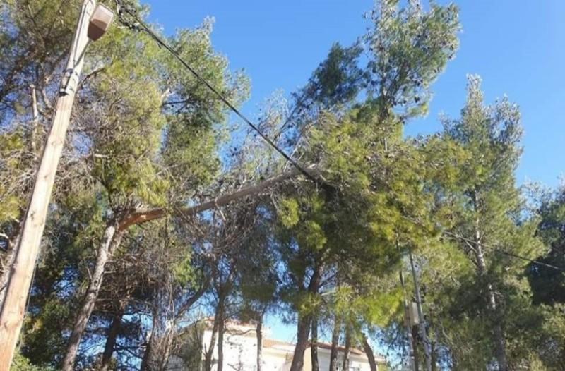Αφίδνες: Δέντρο έπεσε πάνω σε καλώδιο της ΔΕΗ! Φόβοι για ηλεκτροπληξία!