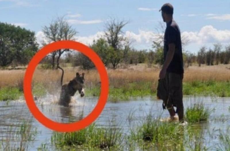 Βλέπει το λιοντάρι να έρχεται επιθετικά κατά πάνω του αλλά αυτός στέκεται ατάραχος! Η συνέχεια; Θα σας μουδιάσει! (Video)