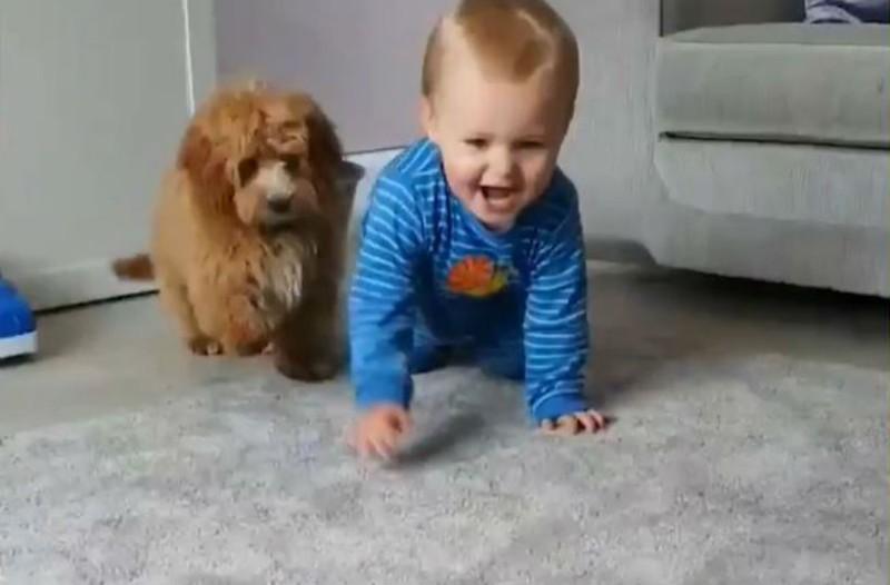 Μωρό και σκύλος παίζουν ένα τρομερό παιχνίδι. Μόλις δείτε το βίντεο θα δακρύσετε από τα γέλια!
