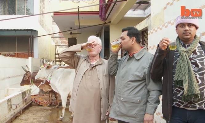 Άντρες πίνουν ούρα αγελάδας και υποστηρίζουν ότι μπορούν να γιατρευτούν από...