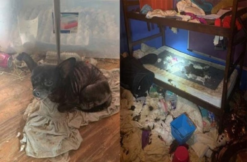 Τραγική μάνα έμενε με τα τρία παιδιά σε σπίτι - σκουπιδότοπο μαζί με 245 ζώα! (video)