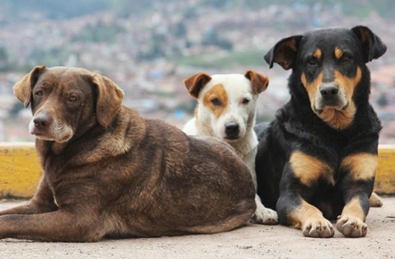Καρδίτσα: Εμπρησμός και πυροβολισμοί με θύματα σκυλιά!