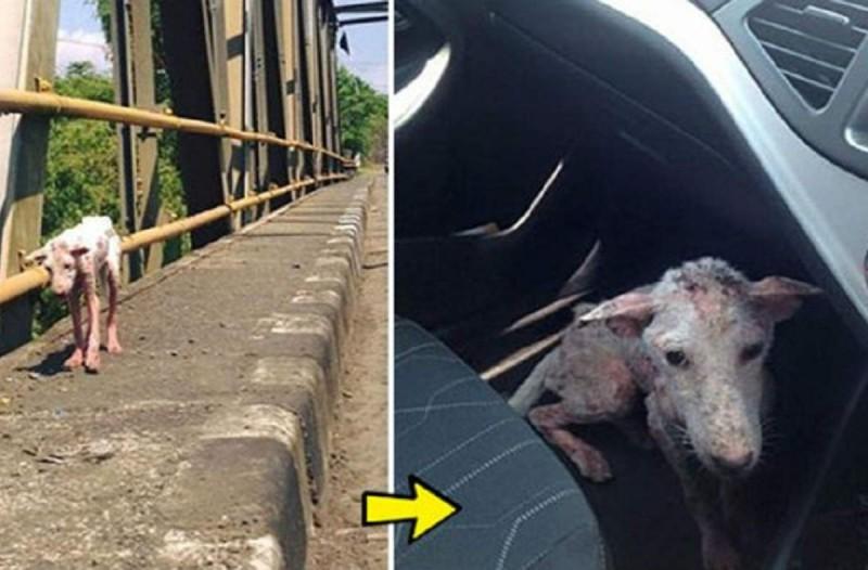Σκελετωμένος σκύλος τριγυρνούσε μόνος στους δρόμους. Ωστόσο μια γυναίκα τον είδε και...