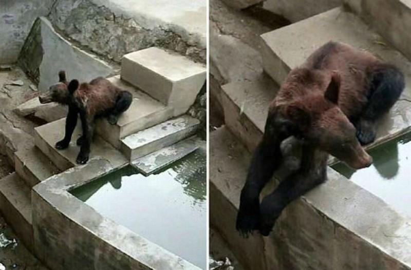 Σάλος: Σκελετωμένη αρκούδα βρέθηκε σε ζωολογικό κήπο - Οι εικόνες σοκάρουν