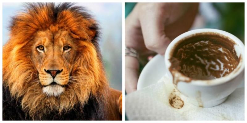 Διαβάστε το φλυτζάνι σας! Αν δείτε ένα λιοντάρι στον καφέ σας τότε...