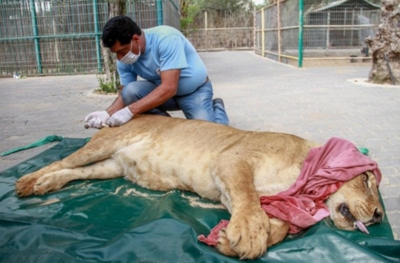Μουμιοποιημένα λιοντάρια, τίγρεις και κροκόδειλοι σε ζωολογικό κήπο! Το θέαμα προκαλεί φρίκη...
