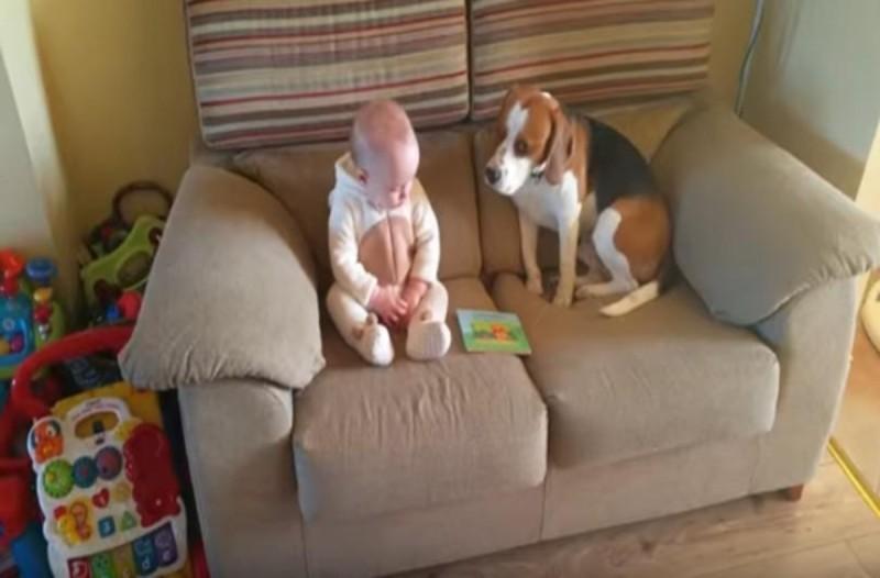 Ο σκύλος έκατσε δίπλα στο νεογέννητο μωρό - Αυτό που έγινε στην συνέχεια θα σας κάνει να