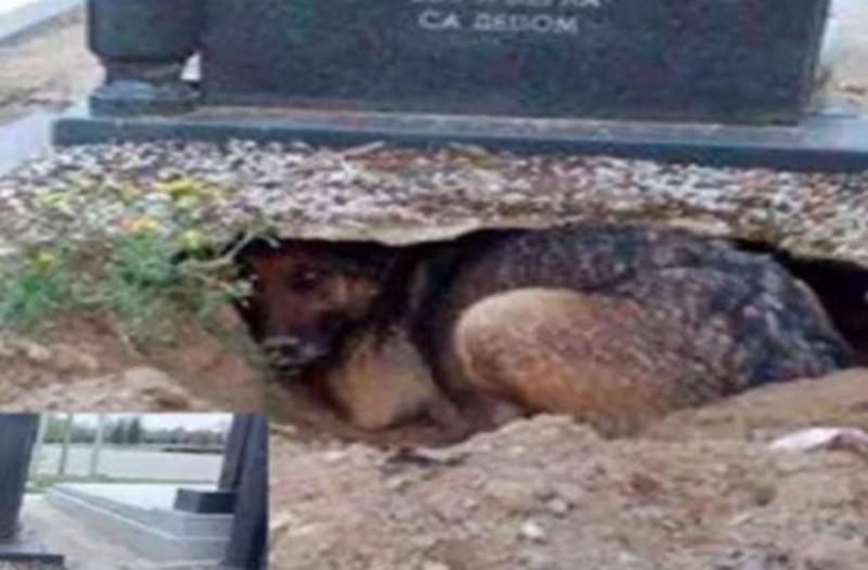 Αυτός ο σκύλος έσκαψε ένα λάκκο και έμεινε μέσα. Όταν μάθετε το γιατί θα λυγίσετε!