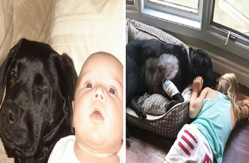 Δεν άκουσε όσους της έλεγαν να μην πάρει σκύλο στο νεογέννητο μωρό της. Αυτό που έγινε όμως 10 χρόνια μετά...