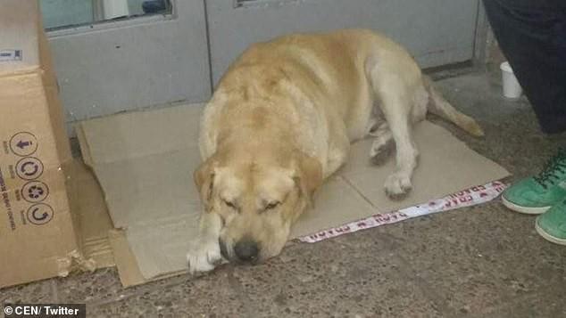 Σκύλος περιμένει για μέρες έξω από νοσοκομείο,