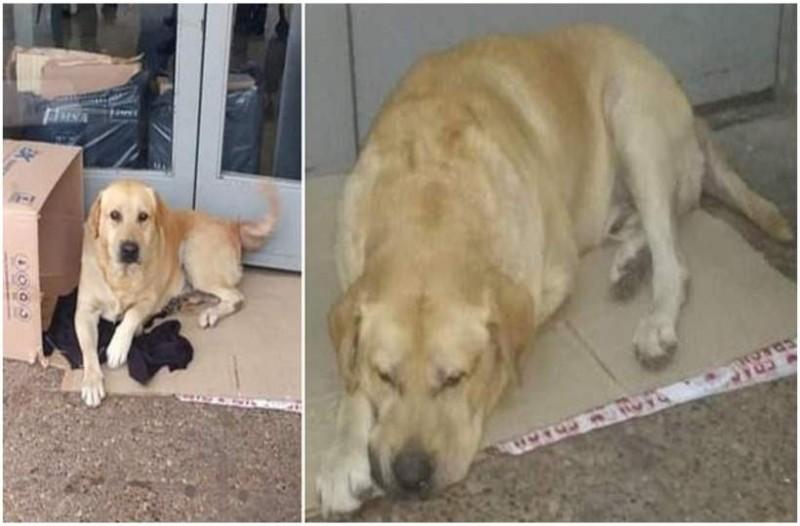 Θα δακρύσετε: Σκύλος περιμένει για μέρες έξω από νοσοκομείο, αλλά ο ιδιοκτήτης του δυστυχώς έχει πεθάνει!