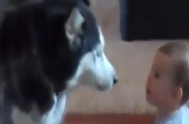 Σκύλος πλησιάζει απειλητικά το μωρό! Δευτερόλεπτα μετά δεν θα πιστεύεις στα... αυτιά σου!