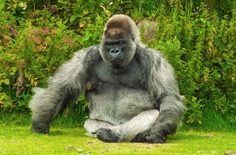 Είναι ένα ζευγάρι και πάει στον ζωολογικό κήπο. Είναι και ένας γορίλας: Το ανέκδοτο της ημέρας (24/03)!