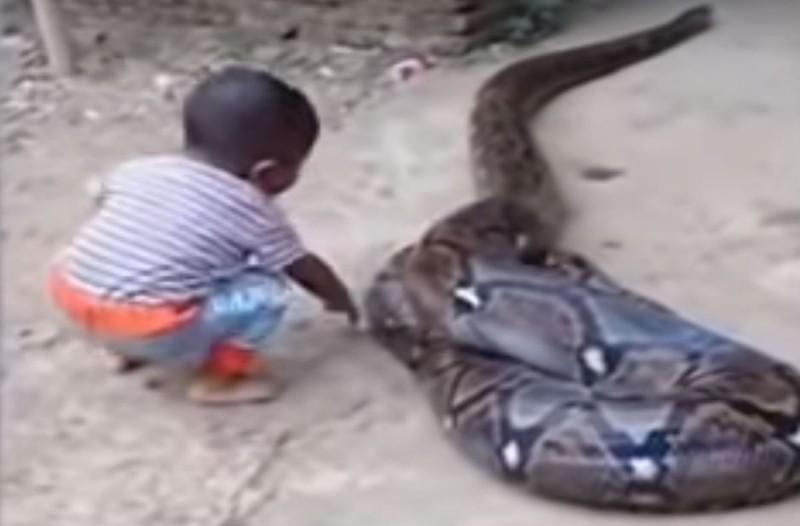 Αδιανόητο: 5χρονος παίζει με ένα φίδι - Η αντίδραση των γονιών του θα σας κάνει να