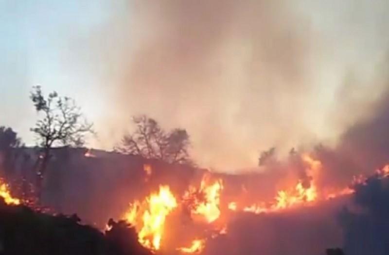 Συναγερμός στο Λασίθι: Πυρκαγιά σε μεγάλη δασική έκταση!