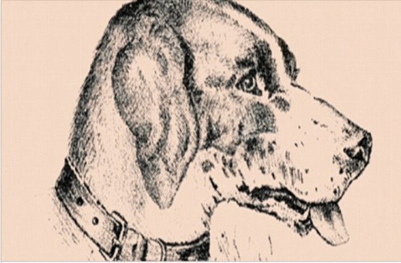 Το 99% των ανθρώπων δεν βλέπει το μυστικό πρόσωπο πίσω από τον σκύλο! Εσείς;