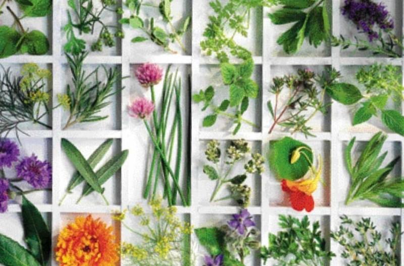 Το «αλφαβητάρι» των βοτάνων και οι θεραπείες τους: Μάθε τις ασθένειες που θεραπεύει κάθε βότανο!