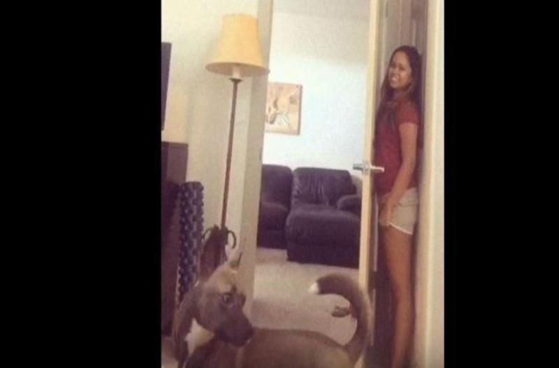 Αυτός ο σκύλος προσπαθεί να παίξει κρυφτό - Αυτό που γίνεται στη συνέχεια θα σας κάνει να δακρύσετε από τα γέλια!