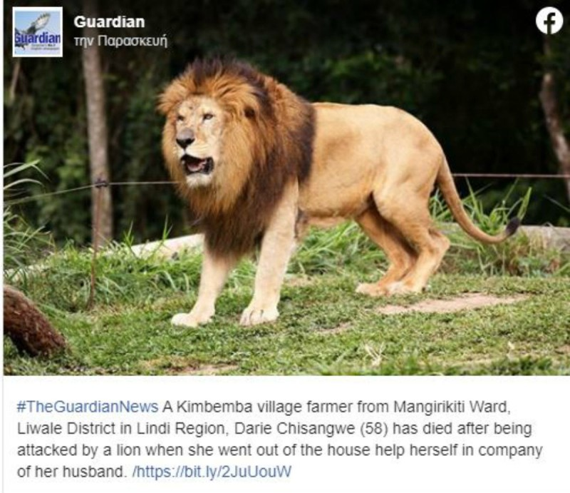 ιστορίες με λιοντάρια