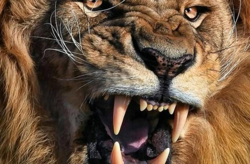 Λιοντάρι έφαγε γυναίκα που βγήκε από το σπίτι της για έναν απίστευτο λόγο