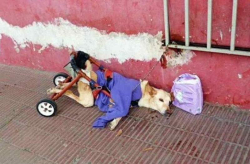 Παράτησαν ανάπηρο σκυλάκι στο δρόμο - Όταν μάθετε γιατί του άφησαν μαζί ένα χαλασμένο καροτσάκι και πάνες θα λυγίσετε