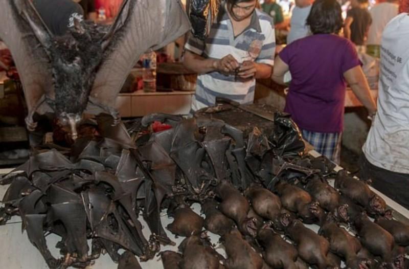 «Φρίκη» στην Ινδονησία: Σφάζουν νυχτερίδες και φίδια σε αγορά και μετά τα τρώνε (Video)
