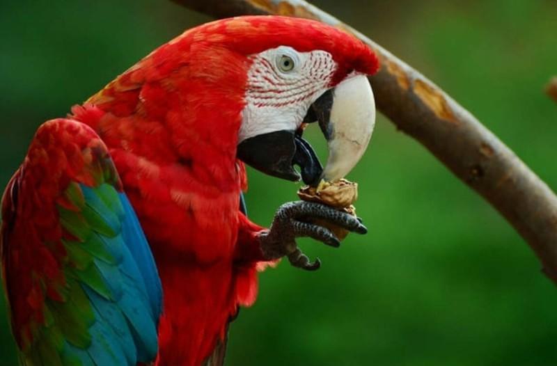 Ο κόκκινος παπαγάλος, ο τρελός και το... δέντρο: Το ανέκδοτο της ημέρας (09/04)