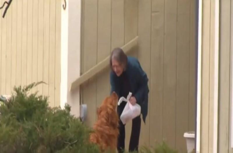 Αυτός ο σκυλάκος μεταφέρει τρόφιμα στους γείτονες της περιοχής - Θα συγκινηθείτε με τον λόγο