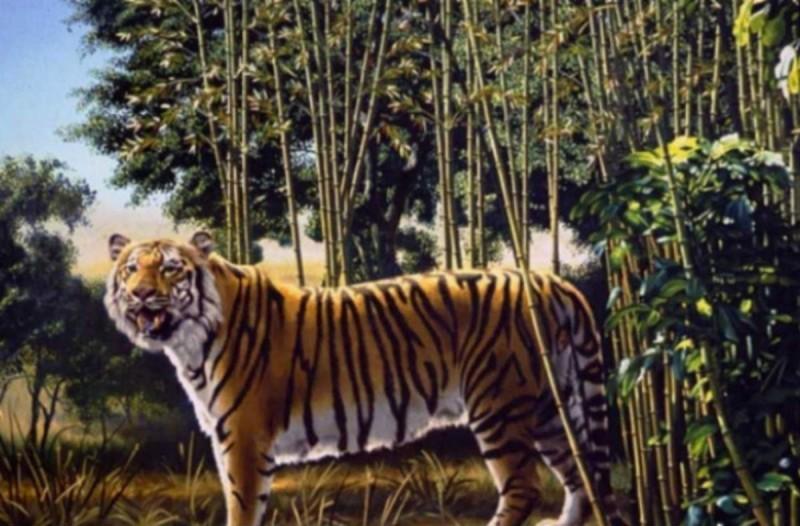 95% των ανθρώπων δεν εντοπίζει την δεύτερη τίγρη στη φωτογραφία - Εσείς μπορείτε να λύσετε το κουίζ;
